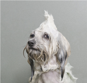 Wet Dogs by Sophie Gamand [photo gallery]